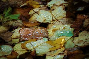 The Colours of Autumn by Tinsella