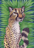 Cheetah Portrait by Eviecats