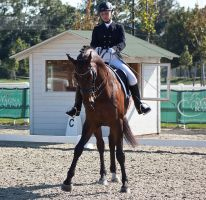 National Dressage and Jumping_130 by CalyHoney