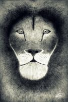 King of the jungle by emafar