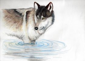 Wolf and Water by RicoShae