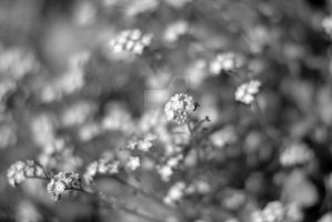 Forget Me Not B+W by MaePhotography2010