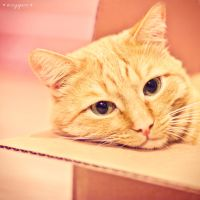 cat in box by oxygen2608
