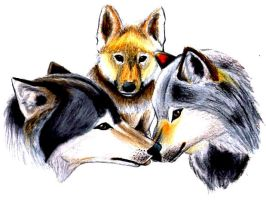 Wolvens color pencil sketch by Dragon2007