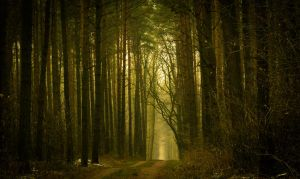 Into the woods by bardzomiprzykro