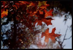 Autumn Leaves by mistakeablyme