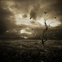 Field of Desolation by MuDDiTToX