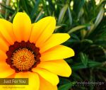 Just For You by mido4design