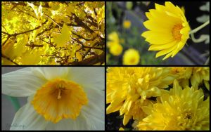 Collage: Yellow II by FireStump