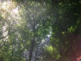 Trees III by PccMBsF