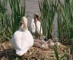 Our nest (1) by starykocur
