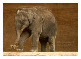 Baby Elephant by Goodbye-kitty975