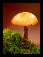 1mushroom by RichardRobert