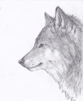 Wolf Drawing... by E-Moe-Wolf
