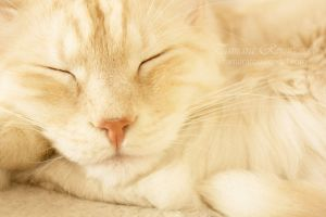 Sleepy head by TammyPhotography
