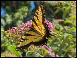 Butterfly closeup by Leah321