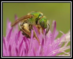 Green on Pink by jesse-botanical