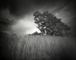 Phtree by gtyler5