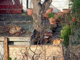 Urban Fox And Domestic Cat by aegiandyad