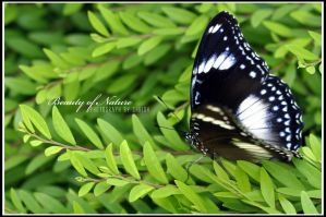 butterfly by ChrishSia