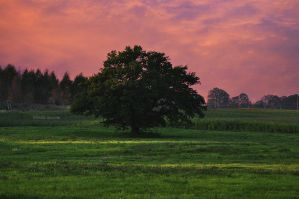The Oak Tree by LindaMarieAnson