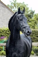 Our friesian stallion by SteflynPhotography