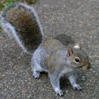 London squirrel by lexidh