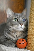 One Eye and a Jack-O-Lantern Ball 3 by shrimpcookie