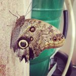 Butterfly by Aponi06