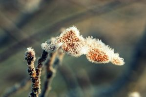 Frosted Leaf by Shreever
