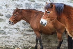 A pair of Horses by JRL5