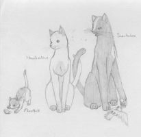 Warrior Cats - Family 2 by SaAsMiAoNa