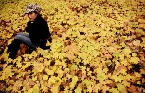 yellow leaves 1 by seafoodmwg