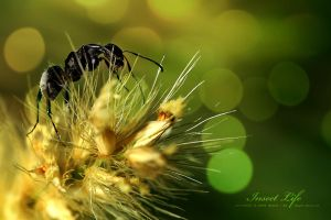 Insect Life by OmarAziz