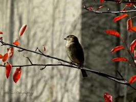 Birdy in the Fall by Michies-Photographyy