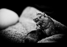 Korvinsky the Gerbil II by Veistim