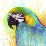 Colorful Bird Watercolor Macaw Parrot by Olechka01