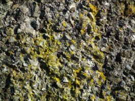 Rock Texture 03 by Limited-Vision-Stock