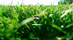 Grass Fields - W7 Logon by secretxax