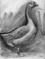 Goose Study by Fenster