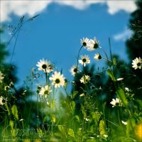 summer time flower by dini25