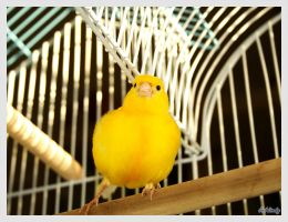 Buttercup the Canary by Radium3D