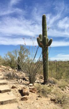 Mighty Saguaro by vacuumslayer