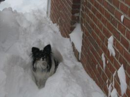 Doggy's in Really Deep Snow by gir-is-me