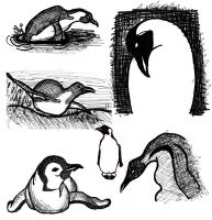 Sketches: penguins by nancy-kelpie