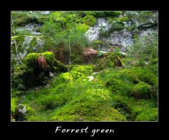 Green Forrest by kaborge