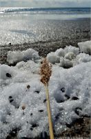 Straw on ice. by secludedspace