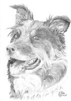 NOT a Horse Portrait-its a Dog by AiSolare
