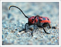 Unknown Insect 1 by phykia
