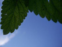 Leaf in the sky by evanna11